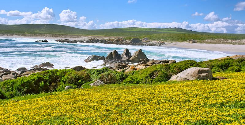 The West Coast National Park abloom with spring flowers.