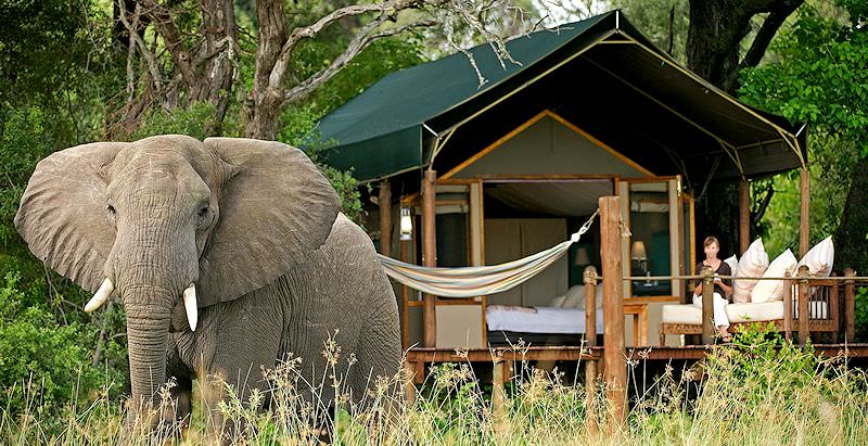 An elephant passes by a tented suite at Stanley's Camp in the Okavango Delta.