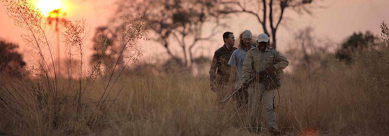 A ranger leads travelers through the wilderness on a late afternoon bush walk.