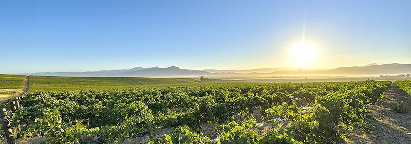 The sun rises over leagues of vineyards in the Cape winelands.