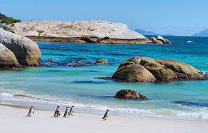 African penguins roaming the sands of Boulders Beach.