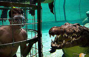 Crocodile cage diving at the Cango Wildlife Ranch.