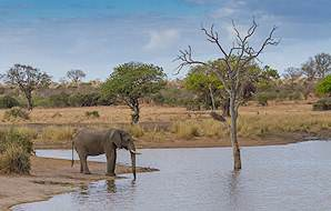 Elephants are common in the Klaserie Private Game Reserve.