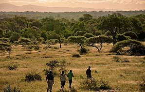 Guests embarking on a walking safari in the Kruger Park.