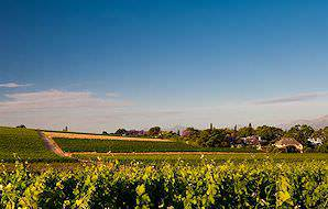 The Paarl Wine Route is home to some spectacular vineyards.