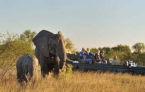 Guests on a game drive observe an elephant cow and her calf.