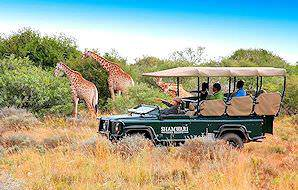 Guests on a game drive in Shamwari spot a trio of giraffes.