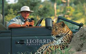 A safari vehicle stops beside a leopard at Leopard Hills.