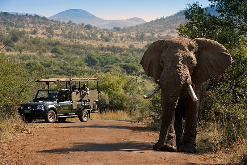 A safari vehicle follows an elephant down a dirt track.