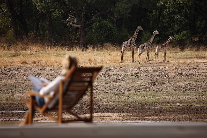 A guest at Chinzombo admires a trio of giraffes.