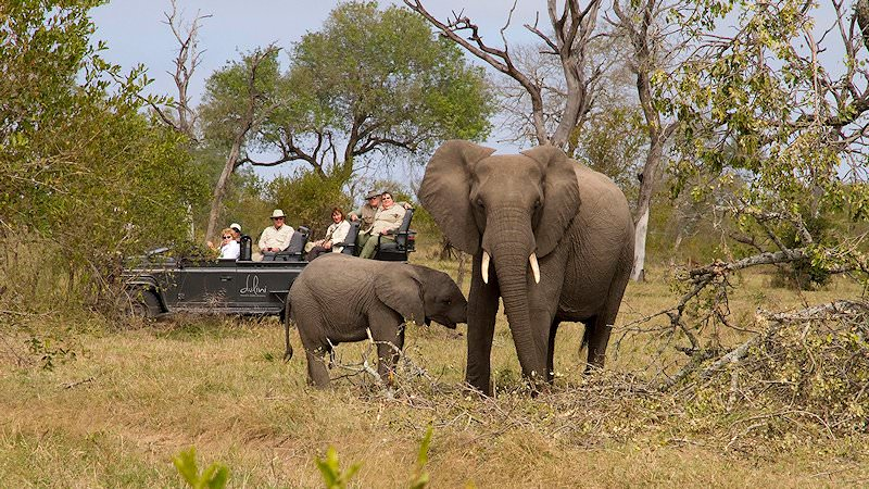 A pair of elephants spotted on safari at Dulini in Sabi Sand.