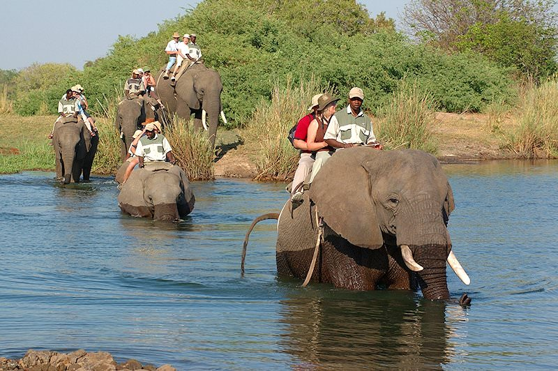 An elephant-back safari near Stanley Safari Lodge.