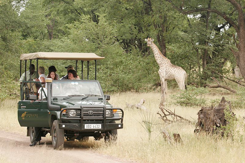 A safari vehicle stops next to a giraffe.