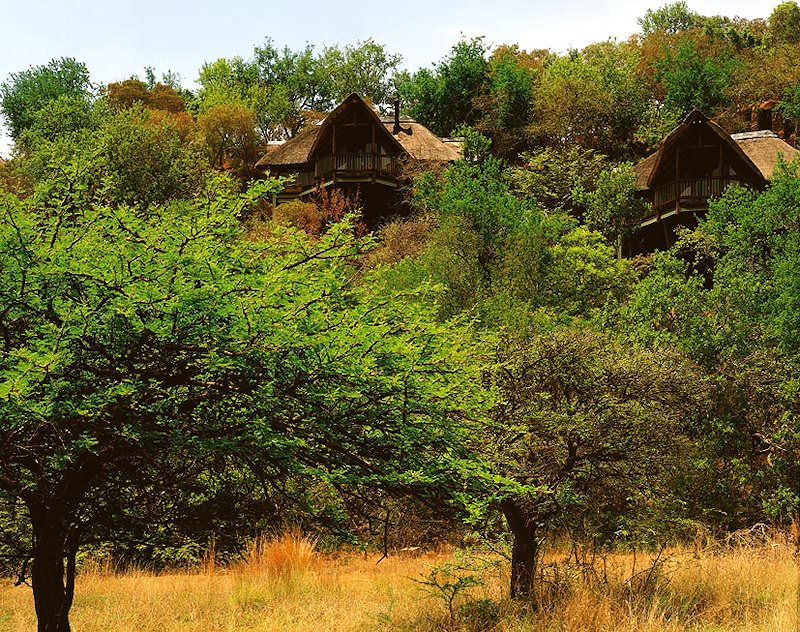 The rooftops of Tshukudu's buildings peek out from the wilderness.