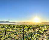 The winelands are a mere 40 minute drive from the Mother City of Cape Town.