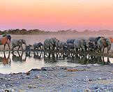 Waterholes are ideal vantage points for game viewing in Etosha.