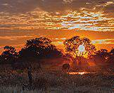 The sun sets over a small gathering of elephants in the Okavango Delta.