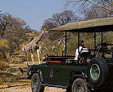 A safari vehicle pauses for guests to admire passing giraffes.