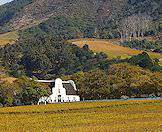 A Cape Dutch building overlooks a vineyard beneath the gaze of a mountain.
