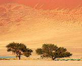 The landscape of Sossusvlei is replete with natural drama.