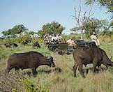 Immerse yourself in the wilderness on a game drive in the Greater Kruger National Park.