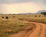 A secondary road in the Kruger National Park rolls through open grasslands.