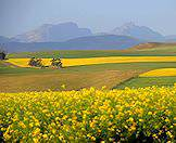 Flowers burst across the hills and valleys of the Overberg.