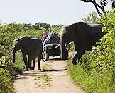 Elephants cross a dirt track as a safari vehicle approaches.