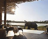 An elephnt wanders past a suite at Eagle Island Lodge.