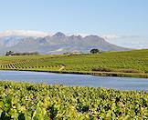 A dam surrounded by lush vineyard in the Boland.