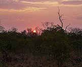A crimson sunset in the African wilderness.