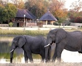 Elephants wander past Lake Arathusa in Sabi Sand.