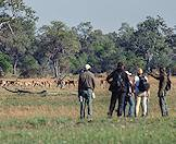 Guests enjoy a bush walk in the Okavango Delta.