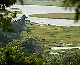 Elephants wander along the shores of the Chobe River.