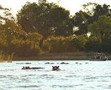 Hippos bask in the waters of the Zambezi River.