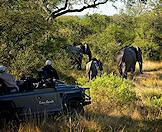 A safari vehicle cautiously follows a family of elephants.
