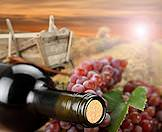 A bottle of wine artfully placed alongside a bushel of grapes.