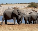 Elephants, kudu, zebras and gemsbok at a waterhole in Etosha.