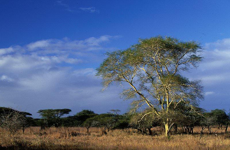 Kruger National Park Amp Zululand Safari 9 Days African Sky