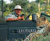 A Leopard Hills game drive vehicle stops alongside a leopard.