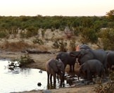 A small herd of elephants encountered on safari in the Kruger National Park.