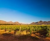 The Cape winelands awash with late afternoon sun.