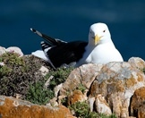 A seagull roosts on a rocky clifftop.