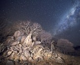 A starlit winter wilderness in South Africa.