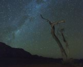 A dead tree stark against the backdrop of the Karoo night sky.