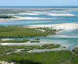 Mangroves lure a wealth of birds and reptiles.