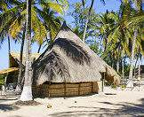A traditional thatched building shaded by lofty palm trees.