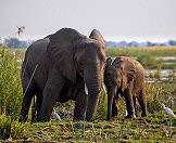 Elephants occur in the majority of Zambia's national parks.
