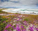 Springtime sees a proliferation of wild flowers on South Africa's West Coast.