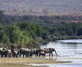 Elephants take advantage of the spoils of one of the Kruger National Park's permanent rivers.